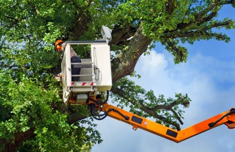 tucson tree trimming service